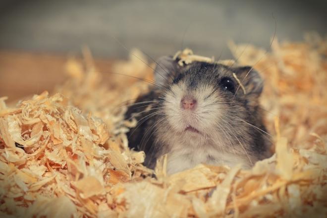 Con sinh năm 2020 tuổi con chuột   đứng đầu trong hàng 12 con giáp