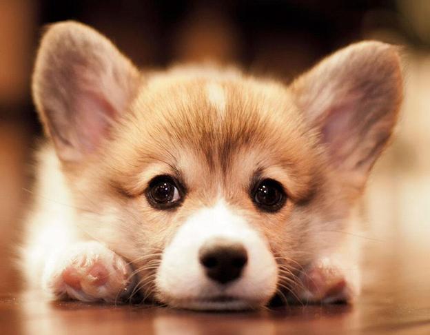 Chó là người bạn trung thành và thân thiết của con người