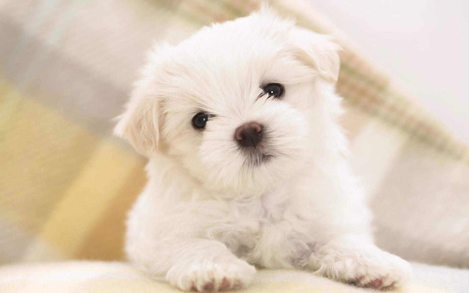 Nằm mơ thấy chó màu trắng là điềm báo tốt trong tương lai