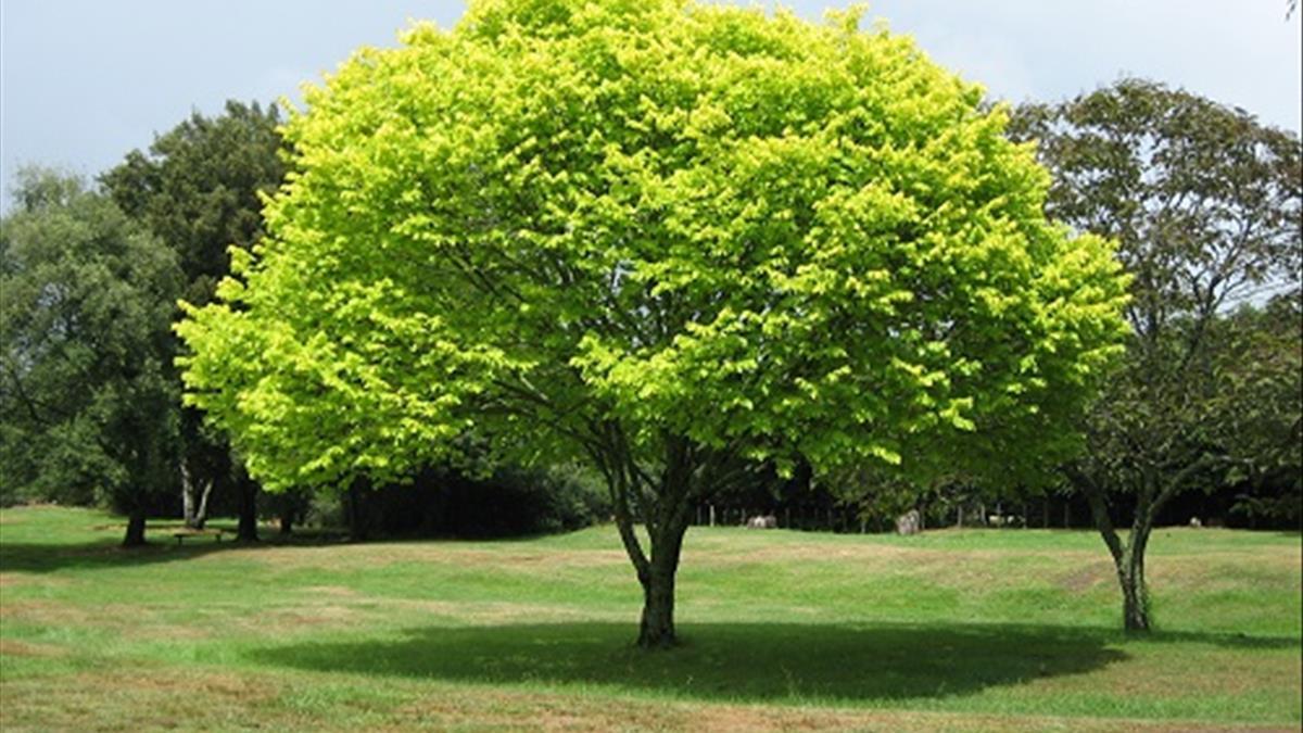 Giải mã giấc mơ thấy cây cối là điềm gì? Con số may mắn?