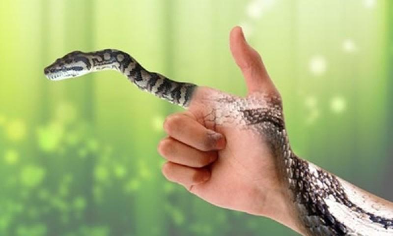 Nằm mơ thấy rắn có điềm gì