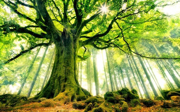 Nằm mơ thấy cây cối là số gì?