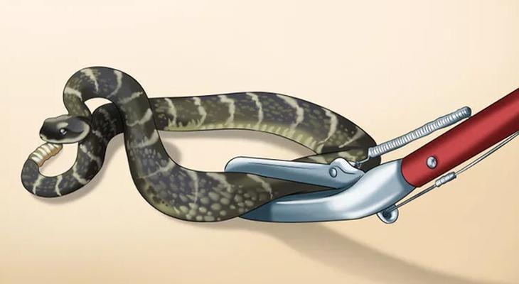 Cách đuổi rắn ra khỏi nhà và vườn đơn giản và an toàn