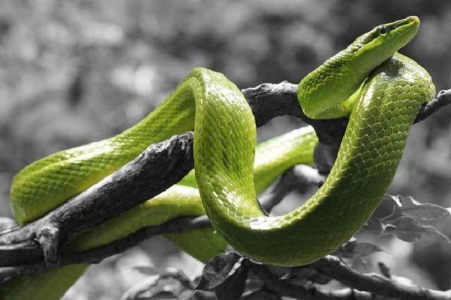 Mơ thấy rắn xanh đánh con gì chiều nay trúng ngay số đề