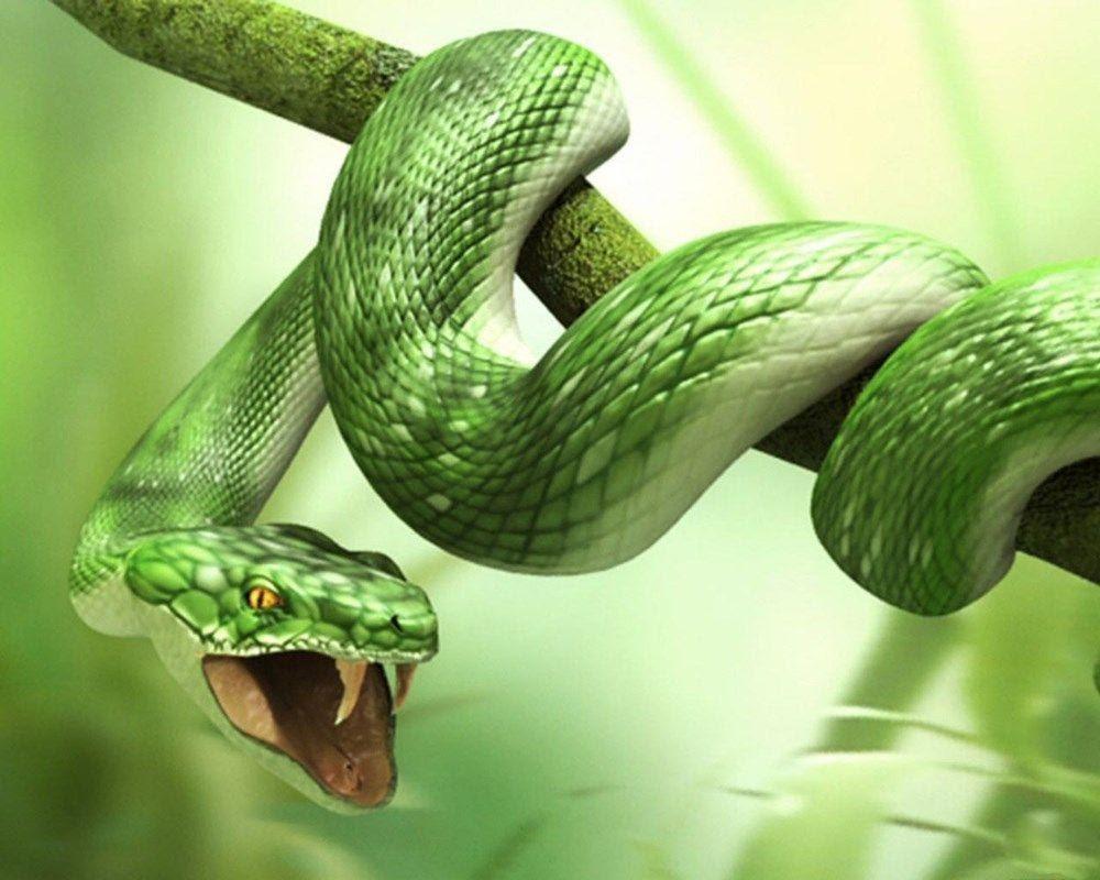 Ngủ mơ thấy rắn là điềm lành hay dữ? - tcxd.vn
