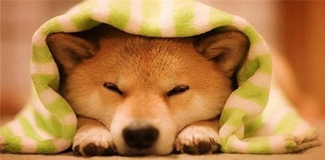 Mơ thấy chó đánh con gì - Những con số liên quan đến chó