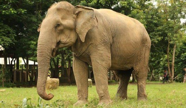 mo thay voi